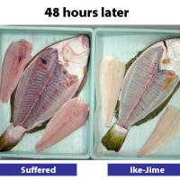 Flounder02